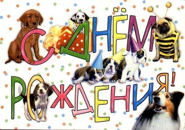 С днем рождения картинки с собаками смешные